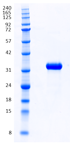 Proteros Product Image - ACK1 (human) (107-395)