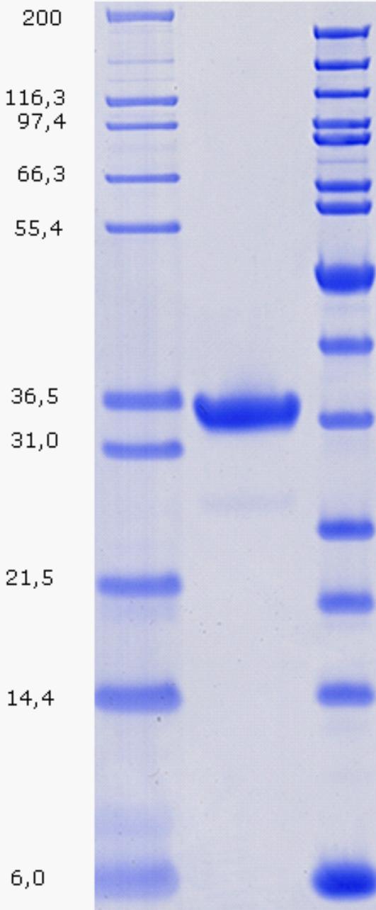 Proteros Product Image - Aurora A (human) (122-403) (D311E) + TPX2 (human) (1-43)