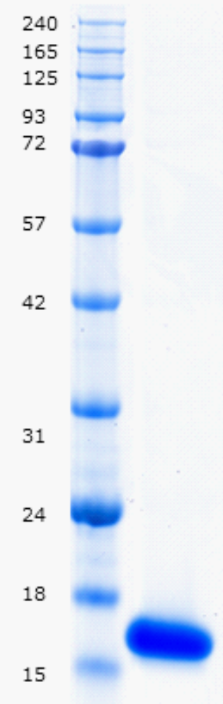 Proteros Product Image - Brd4 (human) (42-168)