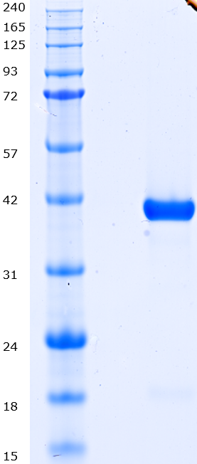 Proteros Product Image - CLK2 (human) (136-496)