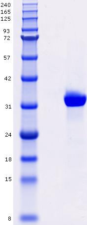 Proteros Product Image - c-Met (human) (1048-1348)