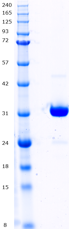Proteros Product Image - c-Met (human) (1051-1349)