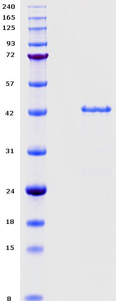 Proteros Product Image - DHODH (human) (30-395)