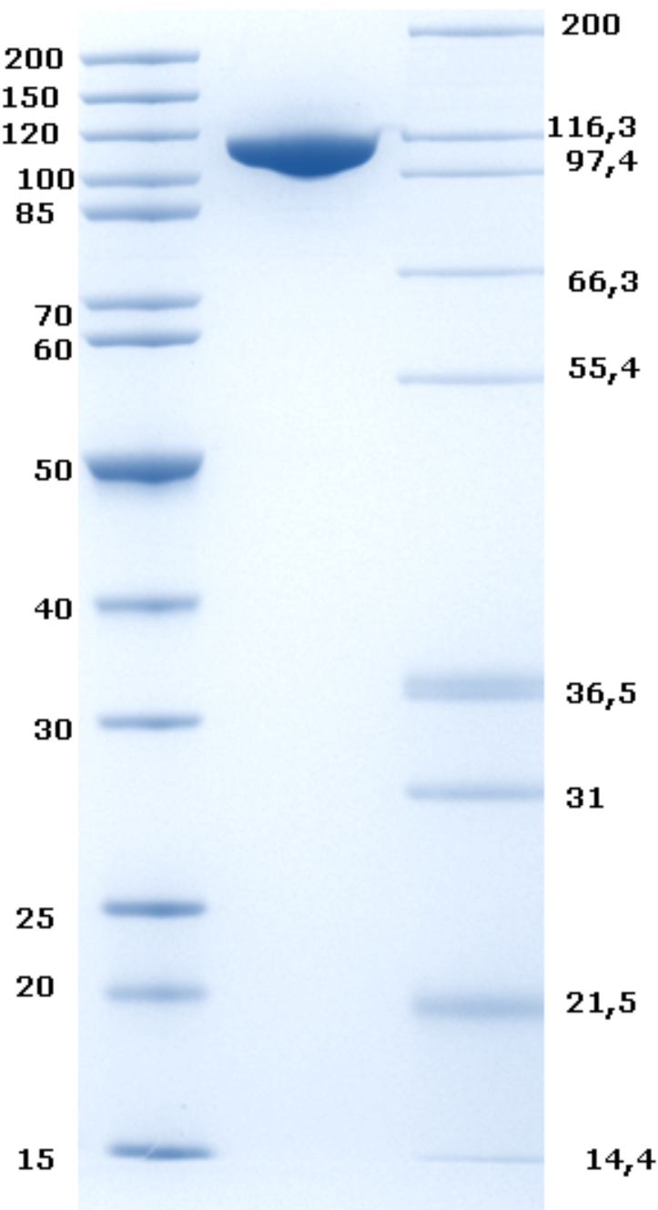 Proteros Product Image - DNMT1 (human) (621-1616)
