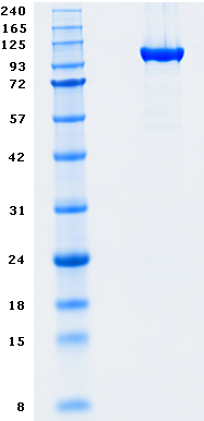 Proteros Product Image - DNMT1 (human) (646-1600)
