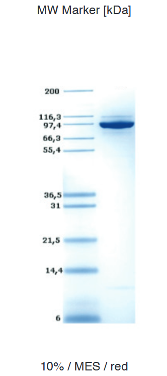 Proteros Product Image - DNMT1 (human) (726-1600)