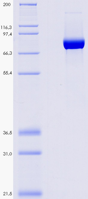 Proteros Product Image - DPP4 (human) (39-766)