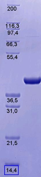 Proteros Product Image - eEF2Kinase (human) (2-341)
