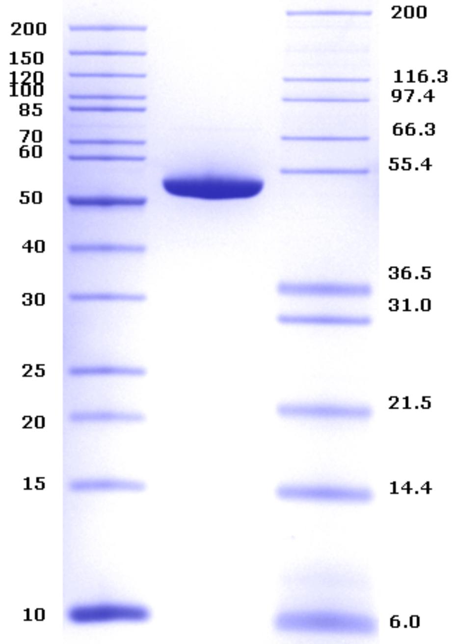 Proteros Product Image - beta-catenin (human) (Hs134-670)+TCF4(Hs1-53)