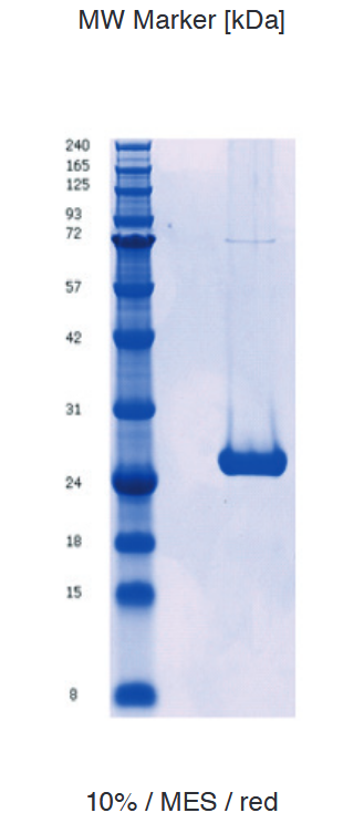 Proteros Product Image - Glucocorticoied Rec. (human) (521 - 777) (F60S+A605V+V702A+E705G)