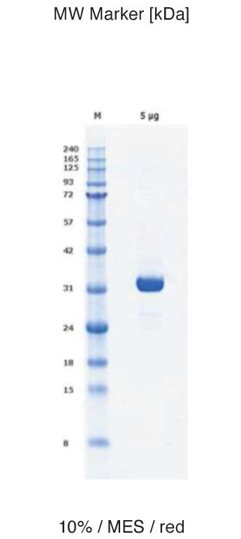 Proteros Product Image - HPK1 (human) (Construct not disclosed, please inquire)