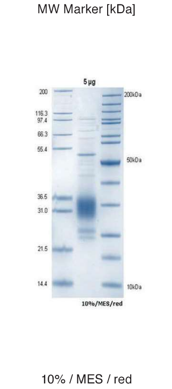 Proteros Product Image - EHMT2 (human) (913-1193)