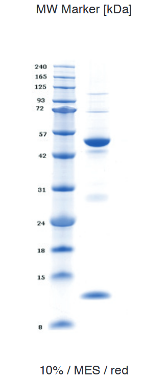 Proteros Product Image - Human HDAC3 (1-428) in complex with SMRT (389-480)