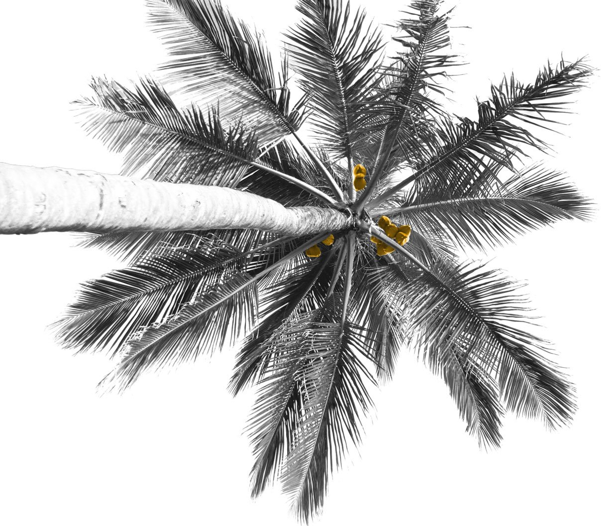 palm-only2